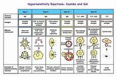 Hypersensitivity Reaction Hypersensitivity Reactions Immunology Flashcards Memorang