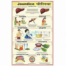 Food Chart For Lady In Tamil Hepatitis Chart India Hepatitis Chart Manufacturer