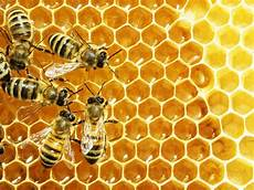 Link Between Insecticides And Collapse Of Honey Bee