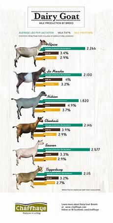 Boer Goat Chart How To Raise Goats In Your Backyard Raising Goats For