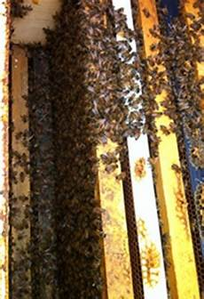 Bee Nucs For Sale Honey Bee Colonies Buying Bees Online