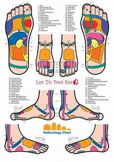 Norman Reflexology Foot Chart Yu Foot Spa 585 446 0006 975 Ridge Road Suite 3