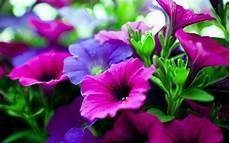 best flower desktop wallpaper nature flower wallpapers wallpaper cave