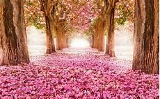 flower wallpaper for desktop free pink blossom flowers tree hd wallpaper desktop