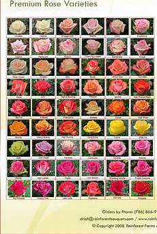 Roses And Its Names Rose Varieties Flower Chart