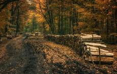 Poland Nature 4k Wallpaper by Landscape Nature Fall Forest Dirt Road Leaves Trees
