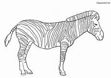 zebra malvorlage kostenlos 187 zebras ausmalbilder