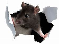 pest pros unlimited