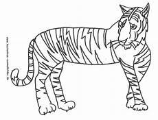 kostenlose ausmalbilder ausmalbild tiger