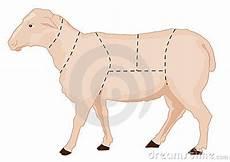 Sheep Chart Stock Photos Image 8377553