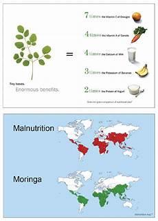 Moringa Chart About Moringa Green World Ventures Llc