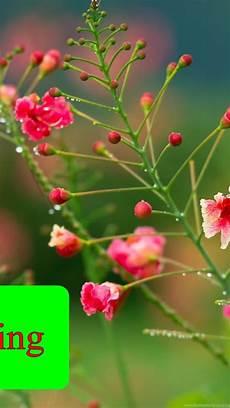 Flower Wallpaper Morning Hd by Morning Flower Hd Wallpapers Desktop Background