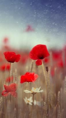 poppy flower wallpaper iphone poppy flower field plant blur iphone 6
