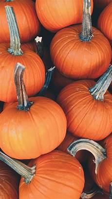 pumpkin iphone wallpaper wallpaper weekends a touch of pumpkin spice for mac