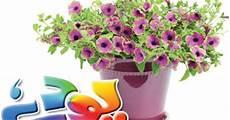 Flower Decoration Ke Wallpaper by Urdu Gardening Tips Indoor Plants In Pakistan Garden