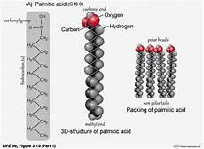 Palmitic Acid Medicine Newbie Revision Lipid Metabolism 1 July 2014
