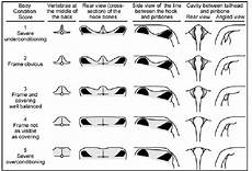 Dairy Cow Chart Dairy Cattle Body Condition Scoring Chart Edmonson Et Al