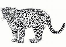 Kinder Malvorlagen Jaguar Ausmalbilder Jaguar Ausdrucken Ausmalbilder