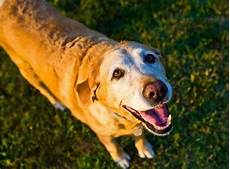 Bladder Cancer Dogs Dog Bladder Cancer When To Euthanise Cloud 9 Vets