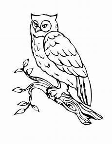 Free Owl Coloring Pages Free Printable Owl Coloring Pages For Kids Bird Coloring