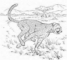 ausmalbilder gepard drucken