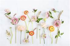 Minimalist Aesthetic Flower Wallpaper by Digital Blooms April 2017 Floral Wallpaper Desktop