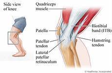 Knees Ligaments And Tendons Muscles Tendons Behind Knee Google Search Hamstring