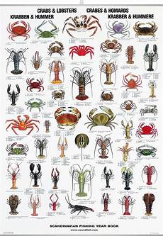 Seafood Chart Crab Amp Lobster Poster Crab Lobster Fish Chart Sea Fish