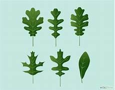 Oak Leaf Id Chart Identify Oak Leaves Oak Leaves Plant Identification And