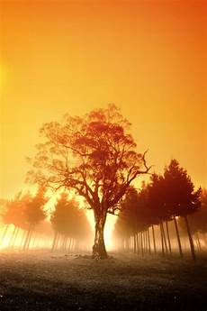 Free Images Free Stock Photo Sunrise Over Australian Forest The