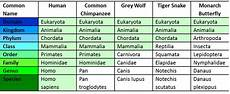 Human Classification Taxonomy Chart Warm Up Using The Table Below What Species Two Are More