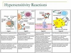 Hypersensitivity Reaction Prepare For Medical Exams Regarding Hypersensitivity