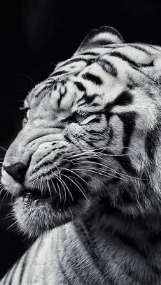 tiger wallpaper iphone 7 plus tiger wallpaper iphone xr wallpaper iphone