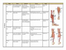 Muscle Origin And Chart Pdf Muscle Chart