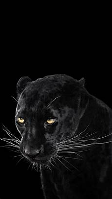 iphone 6 wallpaper black panther black panther wallpaper iphone wallpaper iphone wallpapers