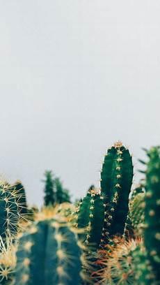 cactus iphone wallpaper 10 pretty iphone x wallpapers p h o n e
