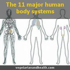 11 Body Systems The Human Body Systems Vegetarianandhealth Com