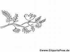 Malvorlagen Vogel Kostenlos Vogel Auf Ast Ausmalbilder Kostenlos