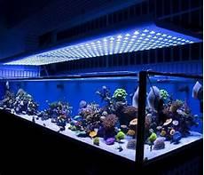 Best Aquarium Lights Top 5 Best Led Lights For Reef Tank In 2018 Market