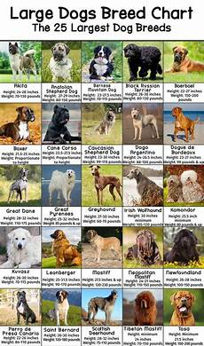 Dog Name Chart Large Dog Breeds Pictures And Names Chart Patchpuppy Com