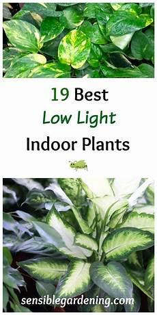 Best Plants For Low Light Terrarium 19 Best Low Light Indoor Plants Gardening Ideas Diy On