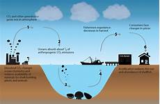 What Effect Does Human Activity Have On Many Ecosystems Climate Action Benefits Shellfish Climate Change In The