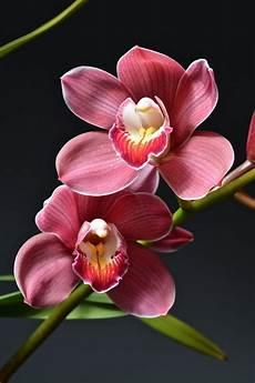 orchidee fiori appassiti orchidee come fare potature e rinvasi dididonna