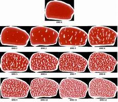 Steak Grade Chart Beginner S Guide To All Things Steak And How To Cook A
