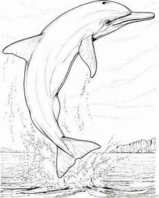 Malvorlagen Delfine Sonnenuntergang Dolphin Coloring Pages For