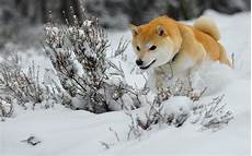 supreme chion wallpaper winter animal wallpaper 48 images