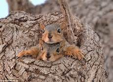 Where Do Squirrels Live Fun Facts Do Squirrels Hibernate Love The Garden