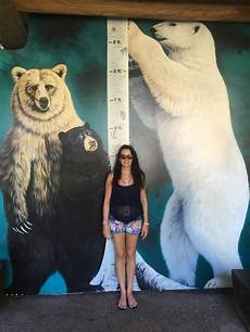 polar size chart how is a polar bear polar bear height zooologist