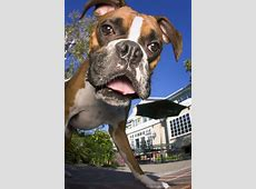 34 best images about Dog selfie on Pinterest   Boxers