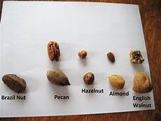 Nut Identification Chart Almost Unschoolers Science Sunday Nuts
